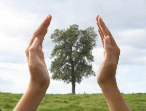 Le meilleur Moment pour Planter un arbre