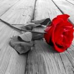 Une rose ? Ou des épines...