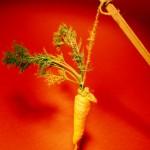 La carotte pour motiver, c'est dépassé